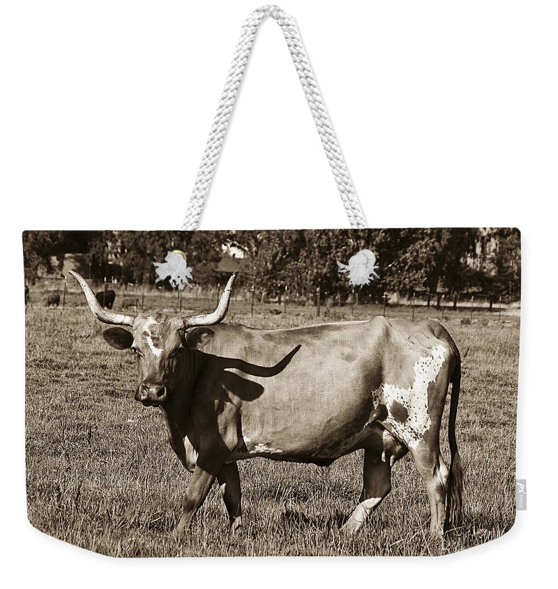 Sepia Weekender Tote Bag featuring the photograph Sepia Longhorn Cow by Jim And Emily Bush