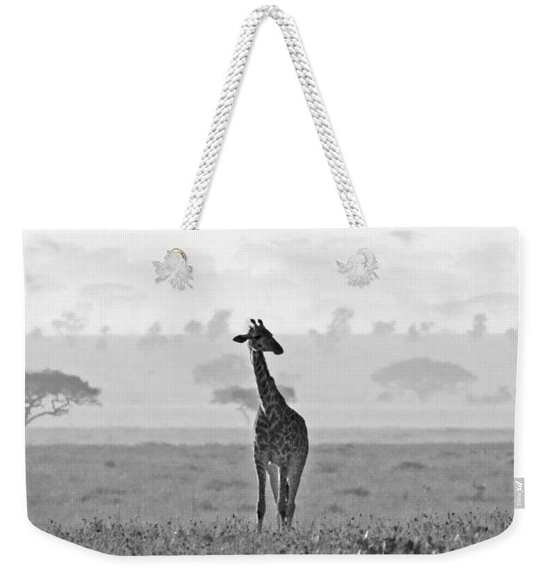 Giraffe Weekender Tote Bag featuring the photograph Serengeti Morning by Max Waugh