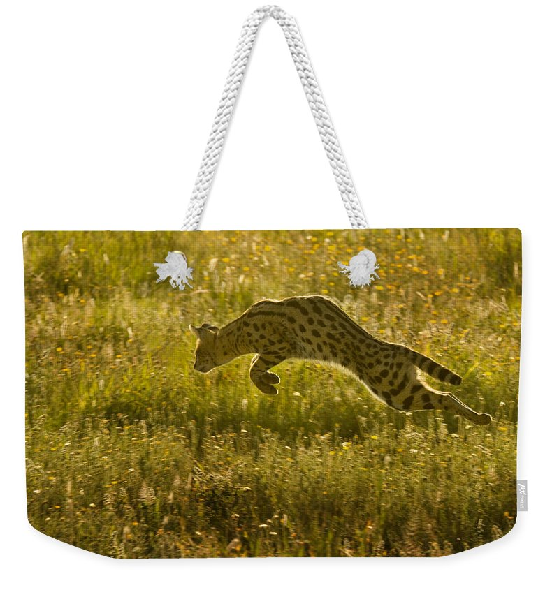 Serengeti National Park Weekender Tote Bag featuring the photograph Serval Cat Pouncing Serengeti by Boyd Norton