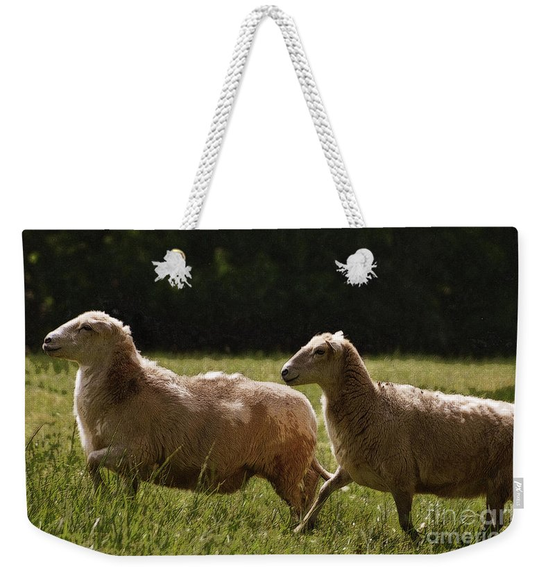 Sheep Weekender Tote Bag featuring the photograph Sheep On The Move by Lydia Holly
