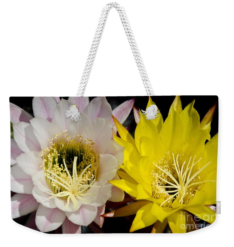 Desert Weekender Tote Bag featuring the photograph Sherbet by Jim And Emily Bush