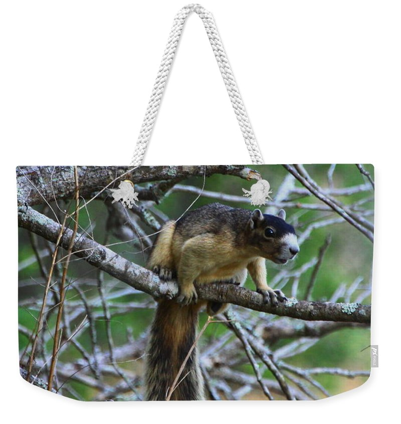 Shermans Fox Squirrel Weekender Tote Bag featuring the photograph Shermans Fox Squirrel by Barbara Bowen