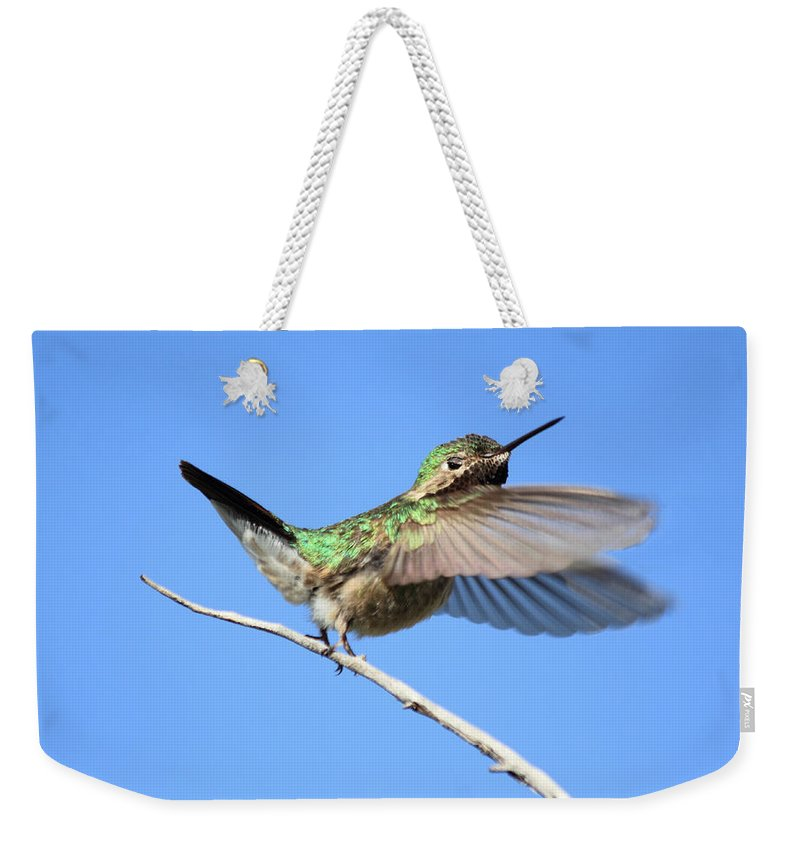 Hummingbird Weekender Tote Bag featuring the photograph Showing My Beauty by Shane Bechler