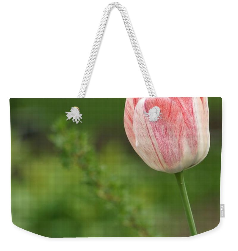 Flower Weekender Tote Bag featuring the photograph Simply Spring by Living Color Photography Lorraine Lynch