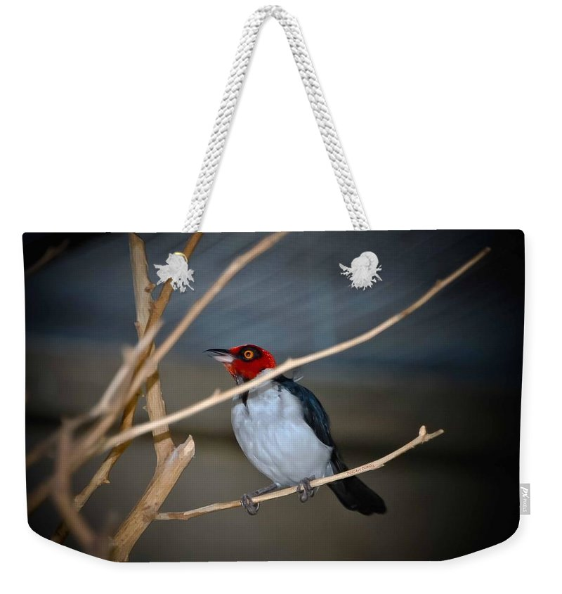 Bird Weekender Tote Bag featuring the photograph Singing A Song by DigiArt Diaries by Vicky B Fuller