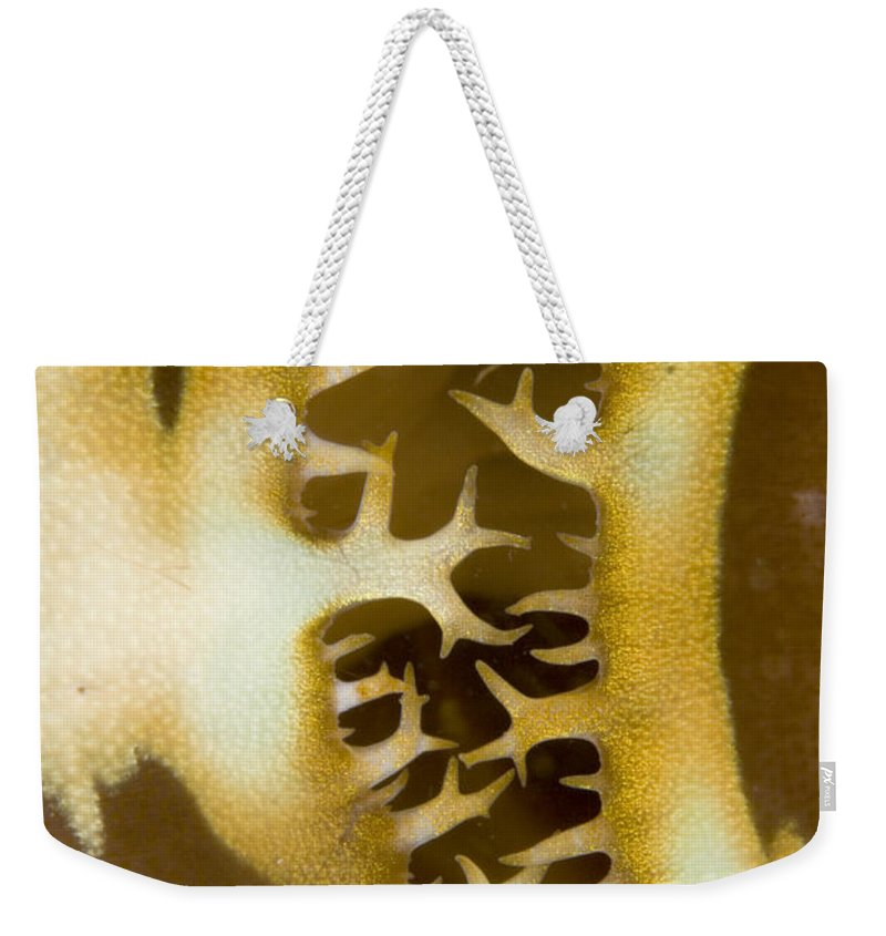 Abstract Weekender Tote Bag featuring the photograph Siphon Opening In Mantle Of A Giant by Tim Laman