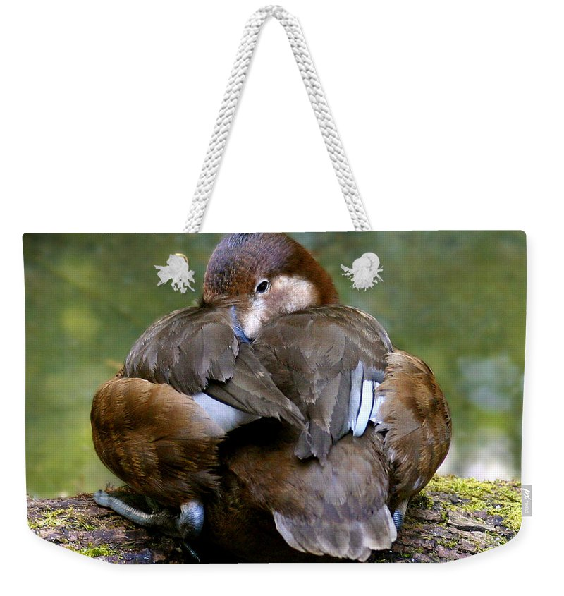 Animals Weekender Tote Bag featuring the photograph Sitting Duck by Jean Noren