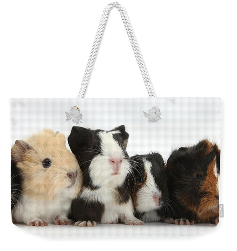 Nature Weekender Tote Bag featuring the photograph Six Young Guinea Pigs In A Row by Mark Taylor