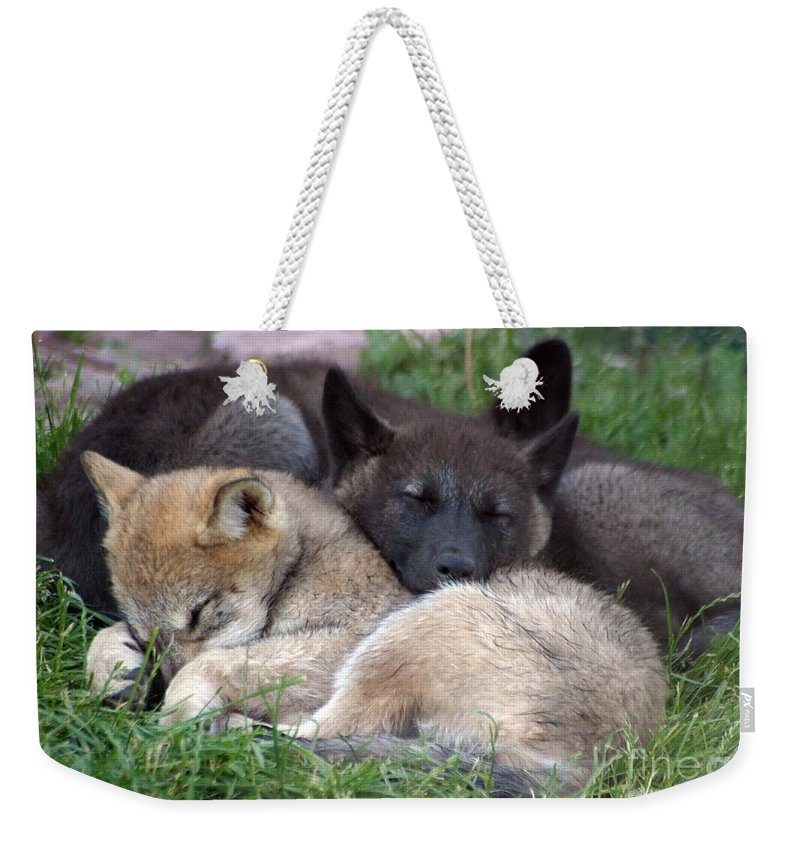 Coyotes Weekender Tote Bag featuring the photograph Slumber Buddies by Living Color Photography Lorraine Lynch