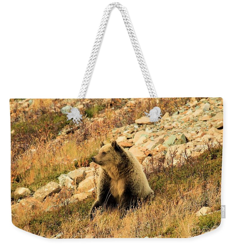 Grizzly Bear Weekender Tote Bag featuring the photograph Smelling The Roses by Adam Jewell