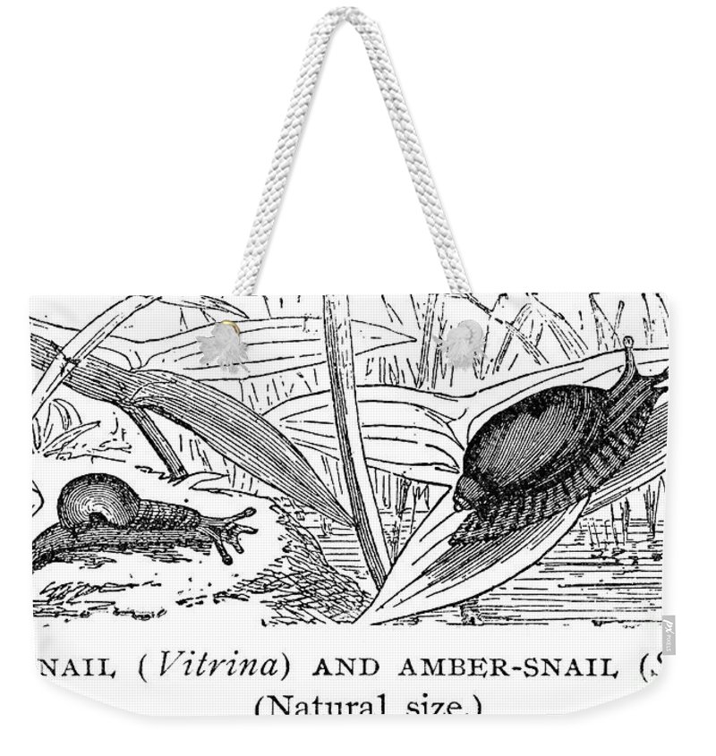 Amber Weekender Tote Bag featuring the photograph Snails by Granger