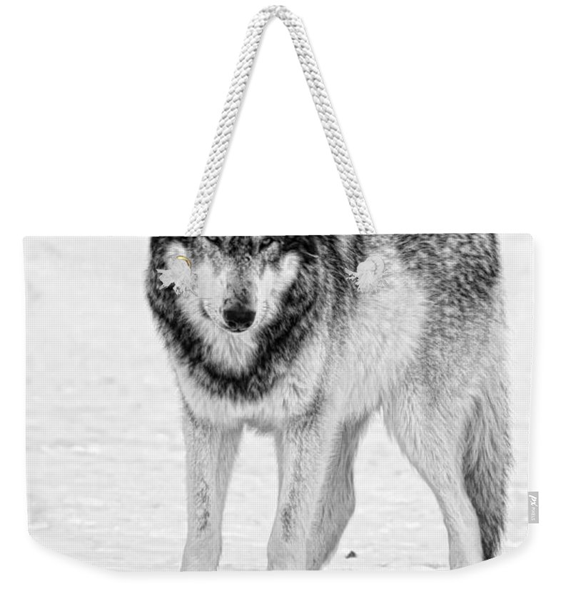 Wolf Weekender Tote Bag featuring the photograph Snow Wolf by Shari Jardina