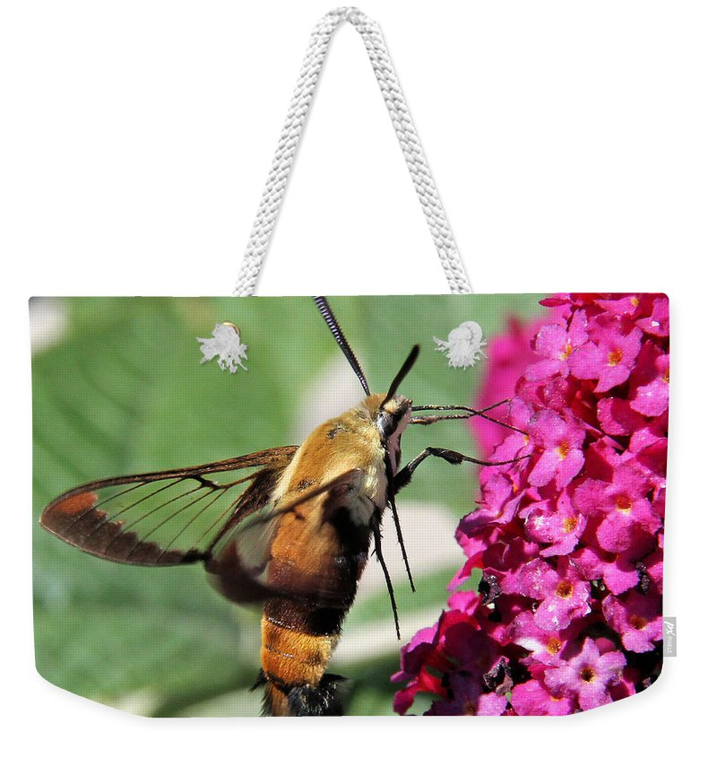 Snowberry Clearwing Weekender Tote Bag featuring the photograph Snowberry Clearwing Moth by Doris Potter