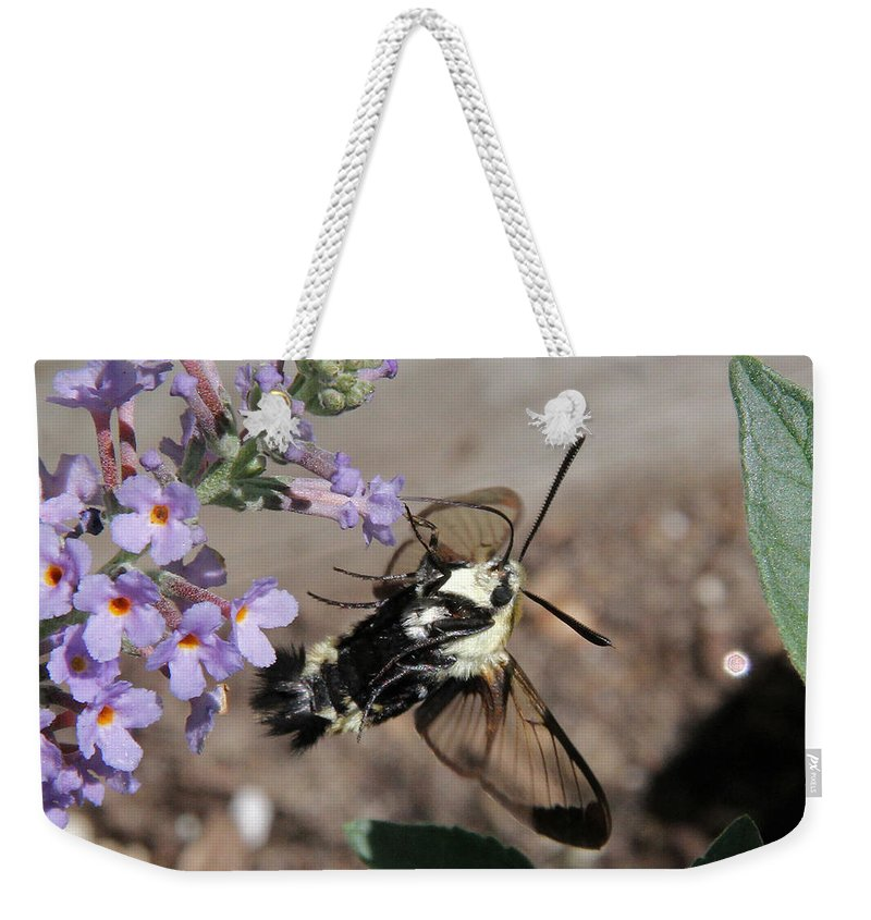 Snowberry Clearwing Moth Weekender Tote Bag featuring the photograph Snowberry Clearwing Moth Feeding by Doris Potter