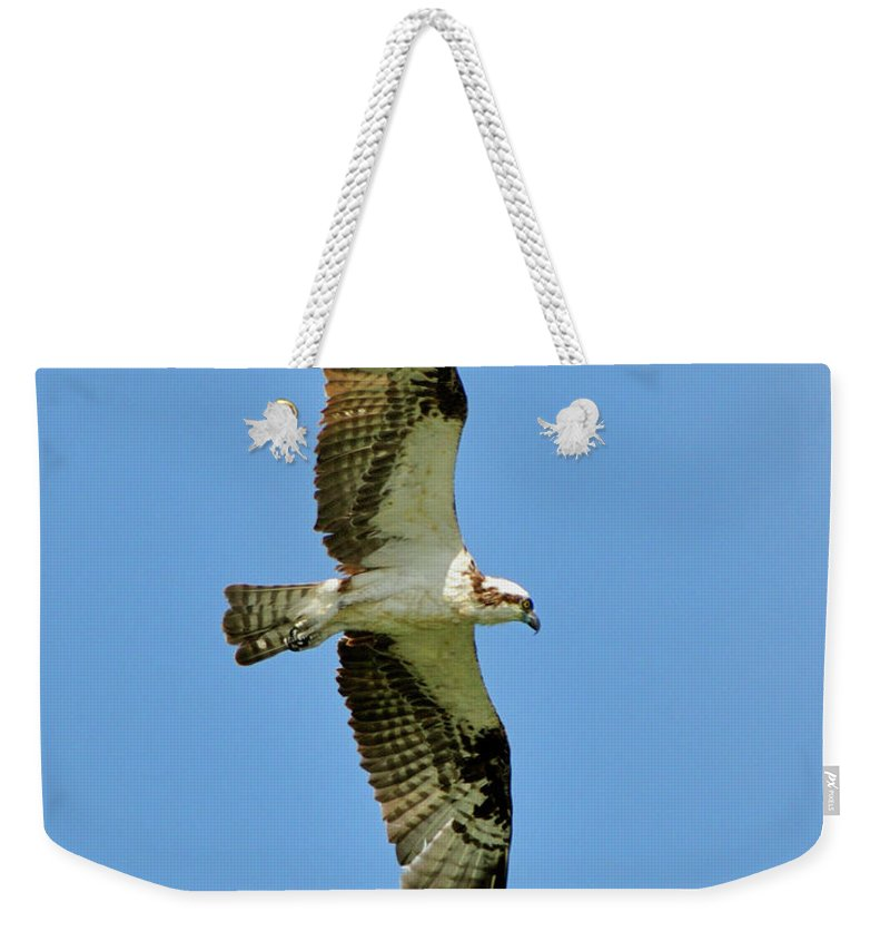 Osprey Weekender Tote Bag featuring the photograph Soaring Above by Bill Dodsworth