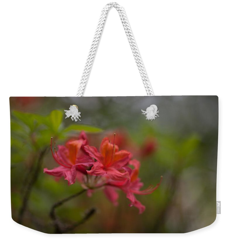 Rhodies Weekender Tote Bag featuring the photograph Soft Red Rhodies by Mike Reid