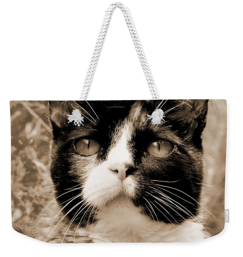 Cat Weekender Tote Bag featuring the photograph Souls Great And Small 2 by Rory Sagner