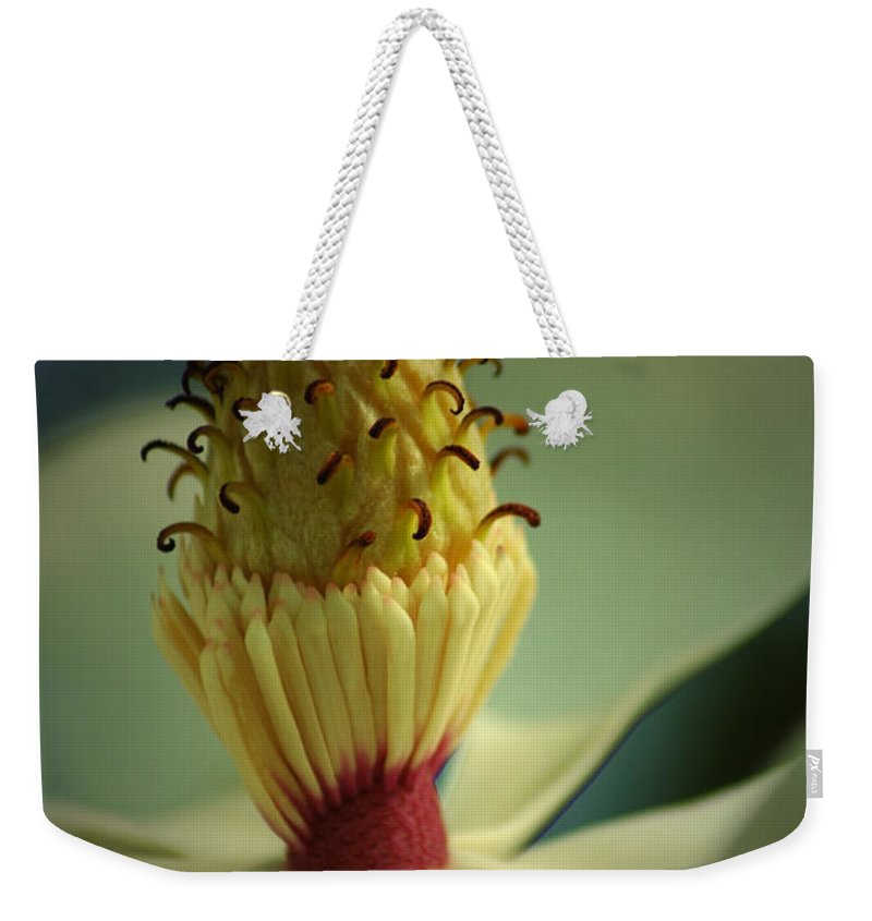 Magnolia Weekender Tote Bag featuring the photograph Southern Magnolia Flower by David Weeks