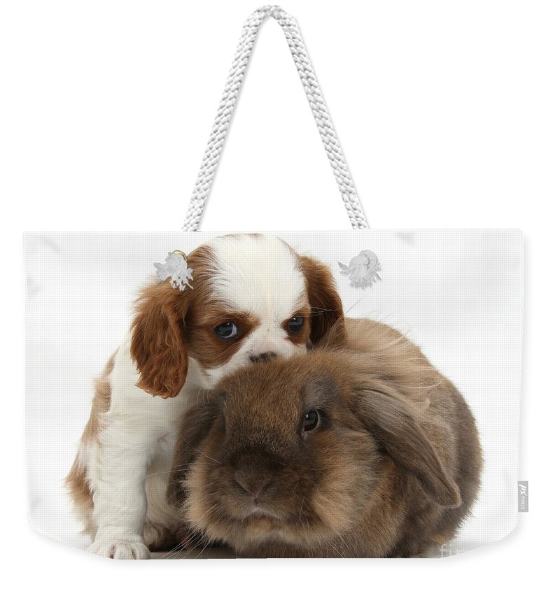 Animal Weekender Tote Bag featuring the photograph Spaniel Puppy And Rabbit by Mark Taylor