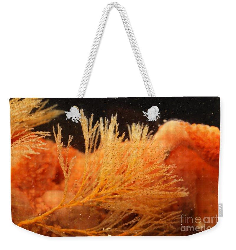 Spiral-tufted Bryozoan Weekender Tote Bag featuring the photograph Spiral-tufted Bryozoan by Ted Kinsman