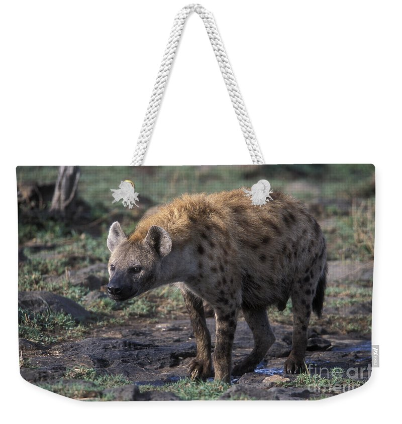 Africa Weekender Tote Bag featuring the photograph Spotted Hyena by Sandra Bronstein