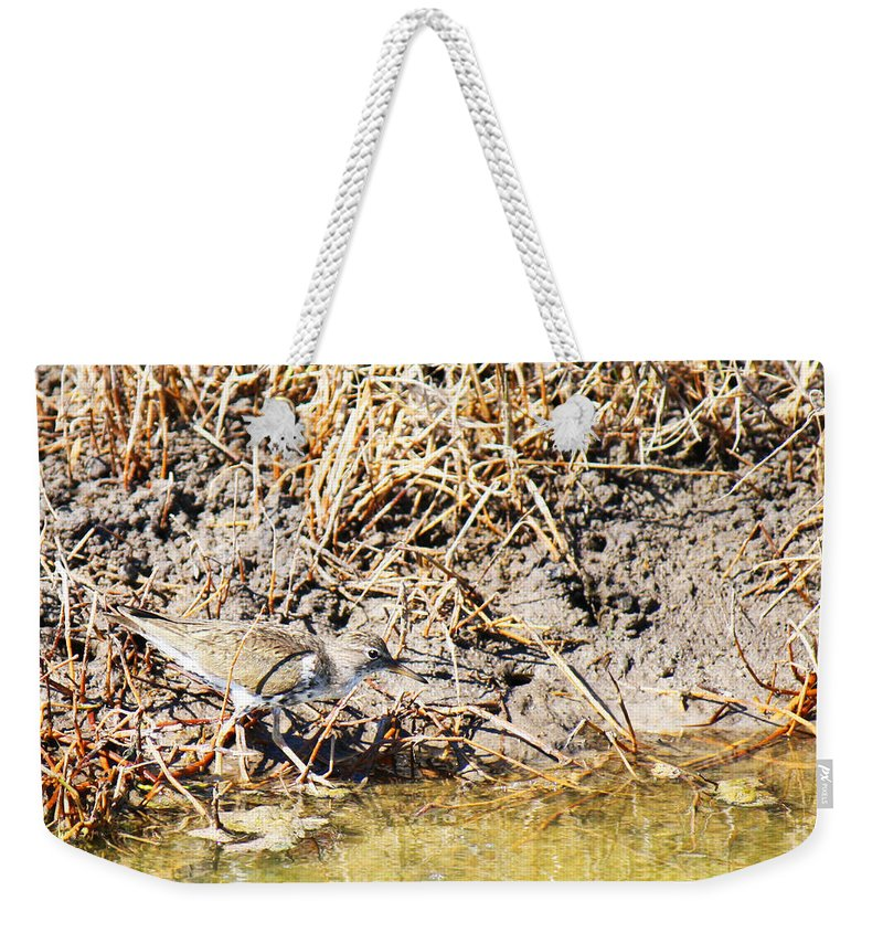 Actitis Macularia Weekender Tote Bag featuring the photograph Spotted Sandpiper At The Canal by Roena King