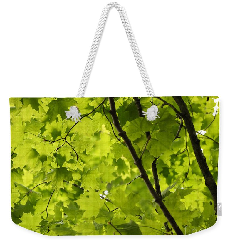 Maple Weekender Tote Bag featuring the photograph Spring - Beneath The Great Maple by Angie Rea