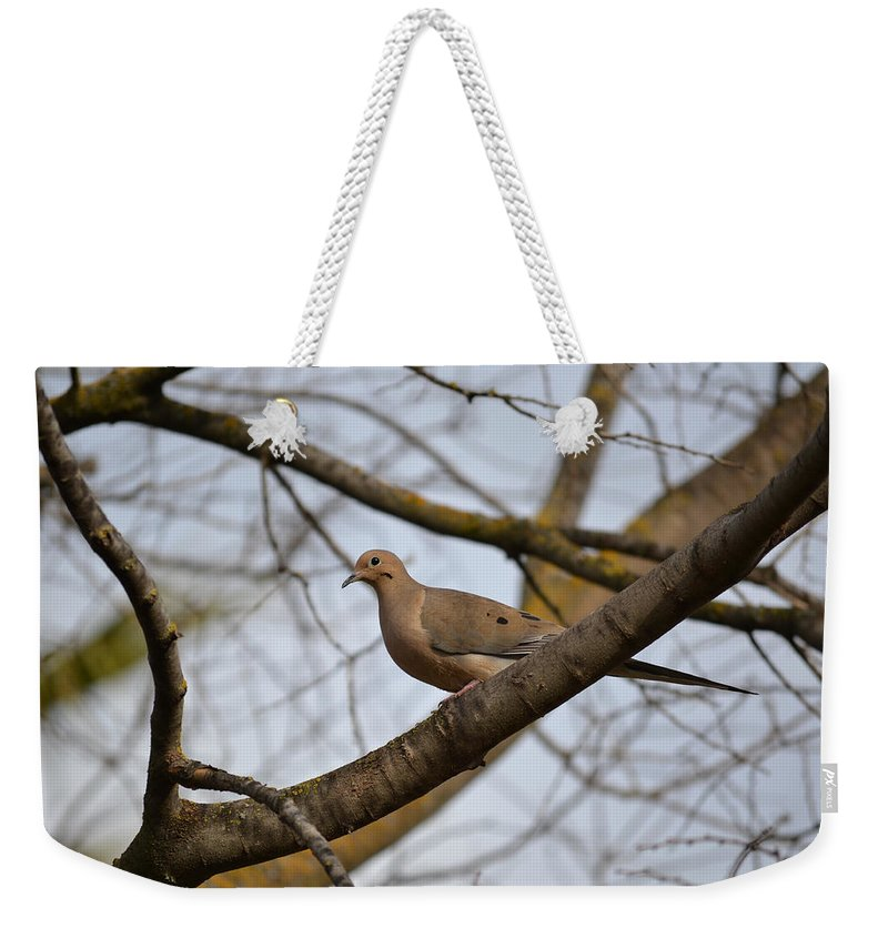 Mourning Dove Weekender Tote Bag featuring the photograph Spring Is Coming by Bill Owen