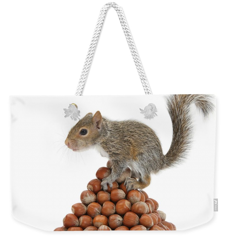 Nature Weekender Tote Bag featuring the photograph Squirrel And Nut Pyramid by Mark Taylor