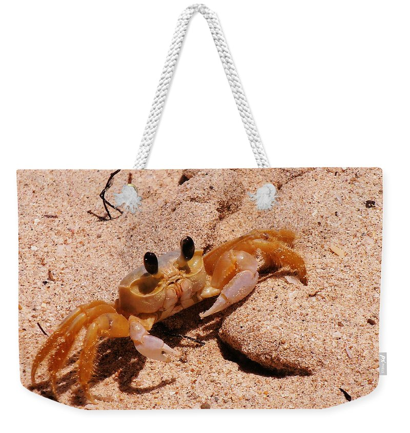 Beach Weekender Tote Bag featuring the photograph St. Lucia Crab On Beach by Kimberly Perry