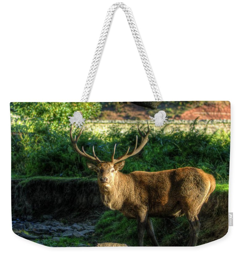 Fallow Deer Weekender Tote Bag featuring the photograph Stag by Yhun Suarez