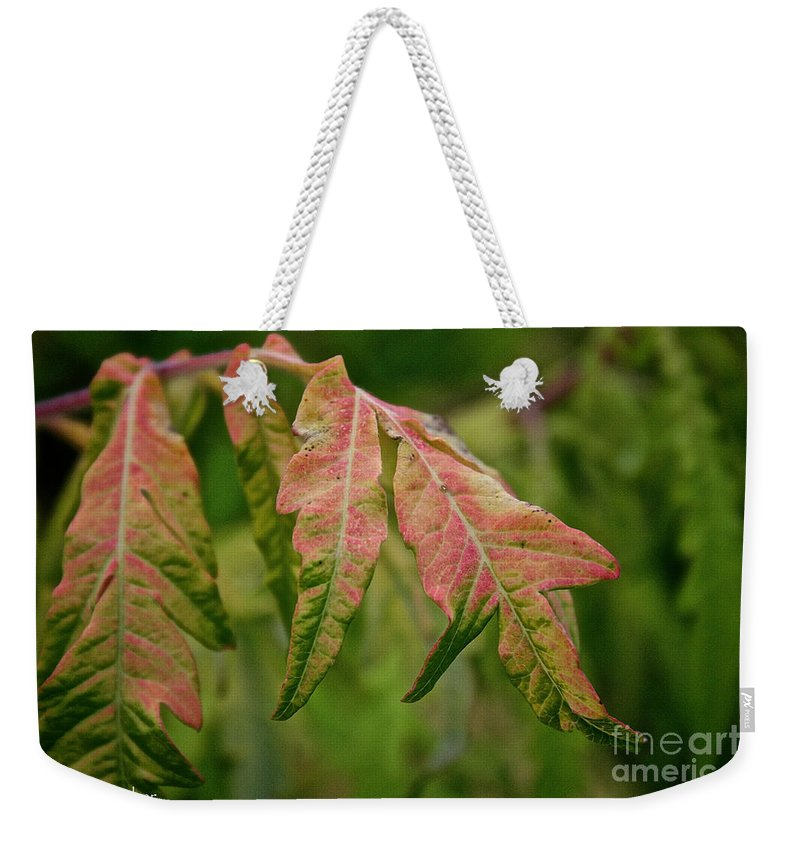 Bush Weekender Tote Bag featuring the photograph Staghorn Sumac by Susan Herber