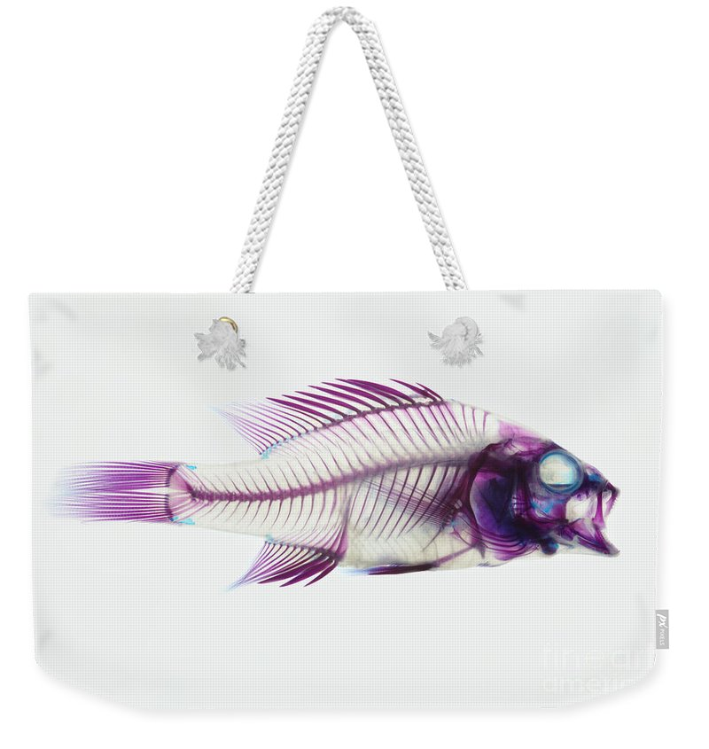 Stained Fish Weekender Tote Bag featuring the photograph Stained Rockbass Fish by Ted Kinsman