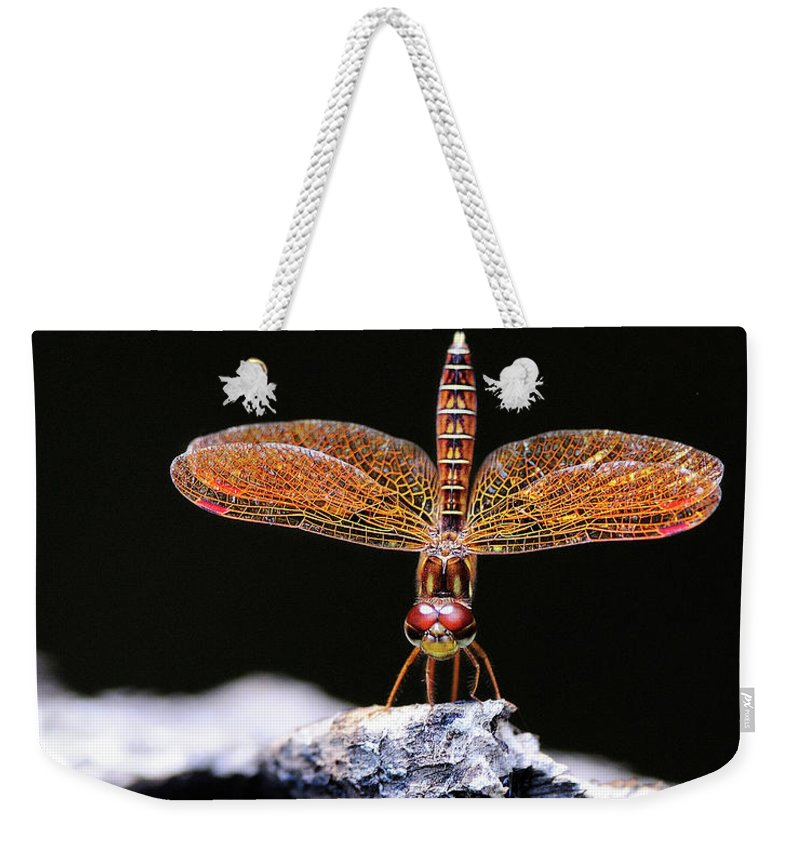 Eastern Weekender Tote Bag featuring the photograph Standing In The Mornig Light by Bill Dodsworth
