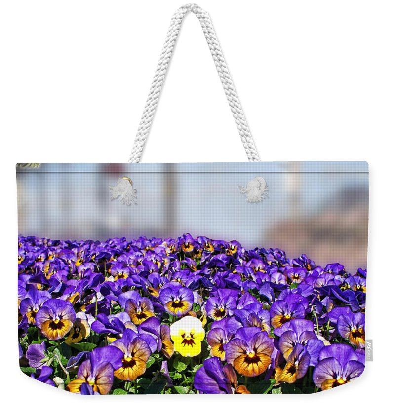 Nature Weekender Tote Bag featuring the photograph Standing Out In The Crowd by Debbie Portwood