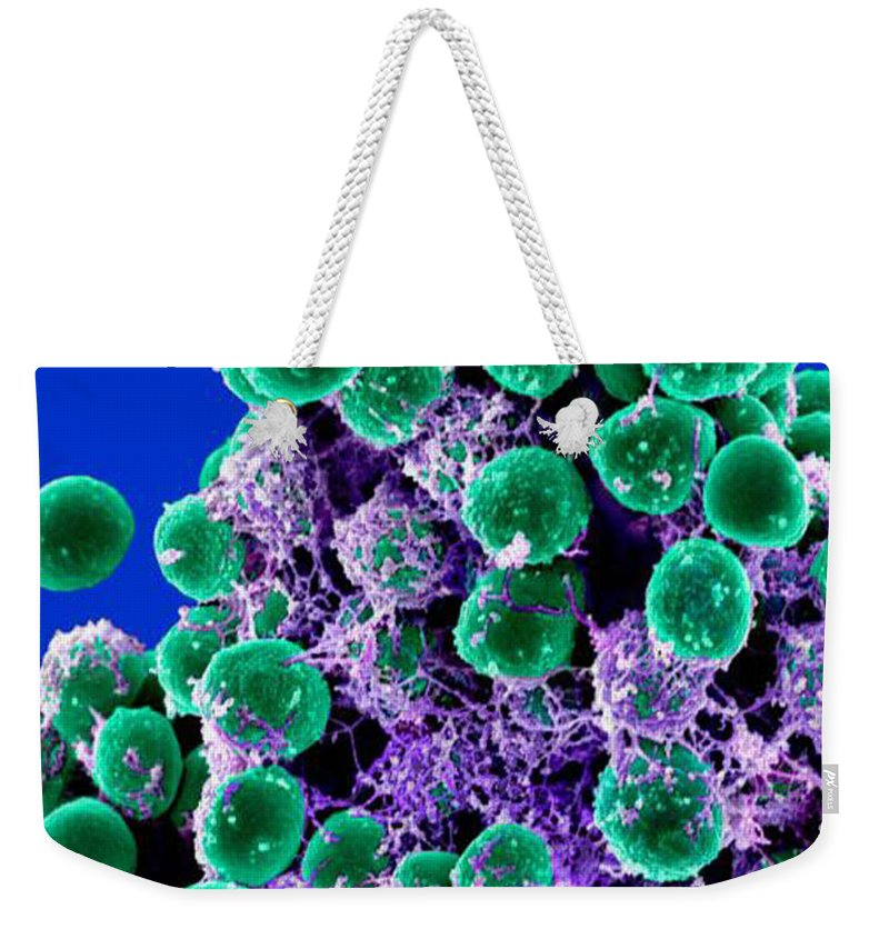 Microbiology Weekender Tote Bag featuring the photograph Staphylococcus Epidermidis Bacteria, Sem by Science Source