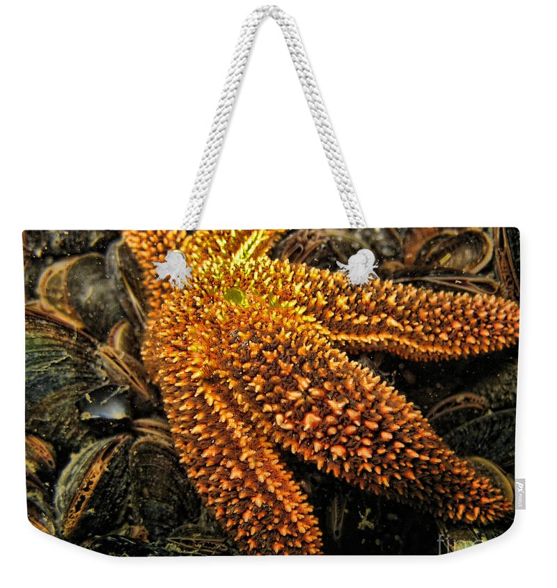 Starfish Weekender Tote Bag featuring the photograph Starfish by Paul Ward