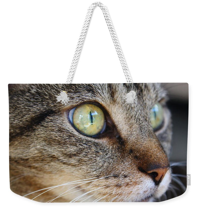 Cat Weekender Tote Bag featuring the photograph Staring Cat by Catie Canetti