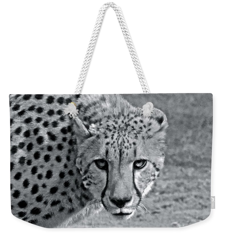 Cheetah Weekender Tote Bag featuring the photograph Staring Contest by Carol Bradley