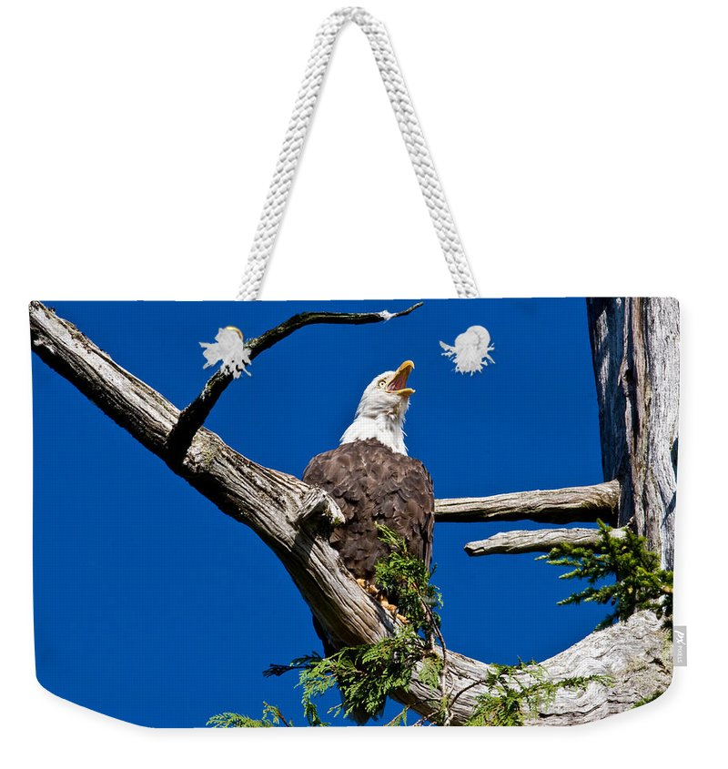 Animals Weekender Tote Bag featuring the photograph Squawking Alaskan Eagle by Jean Noren