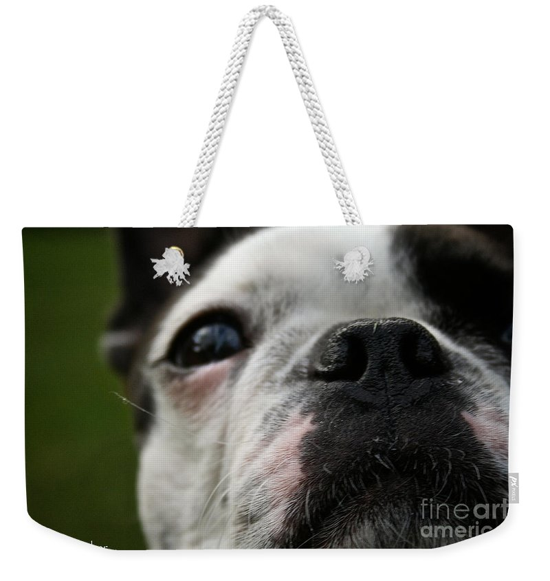 Dog Weekender Tote Bag featuring the photograph Stella's Close Up by Susan Herber