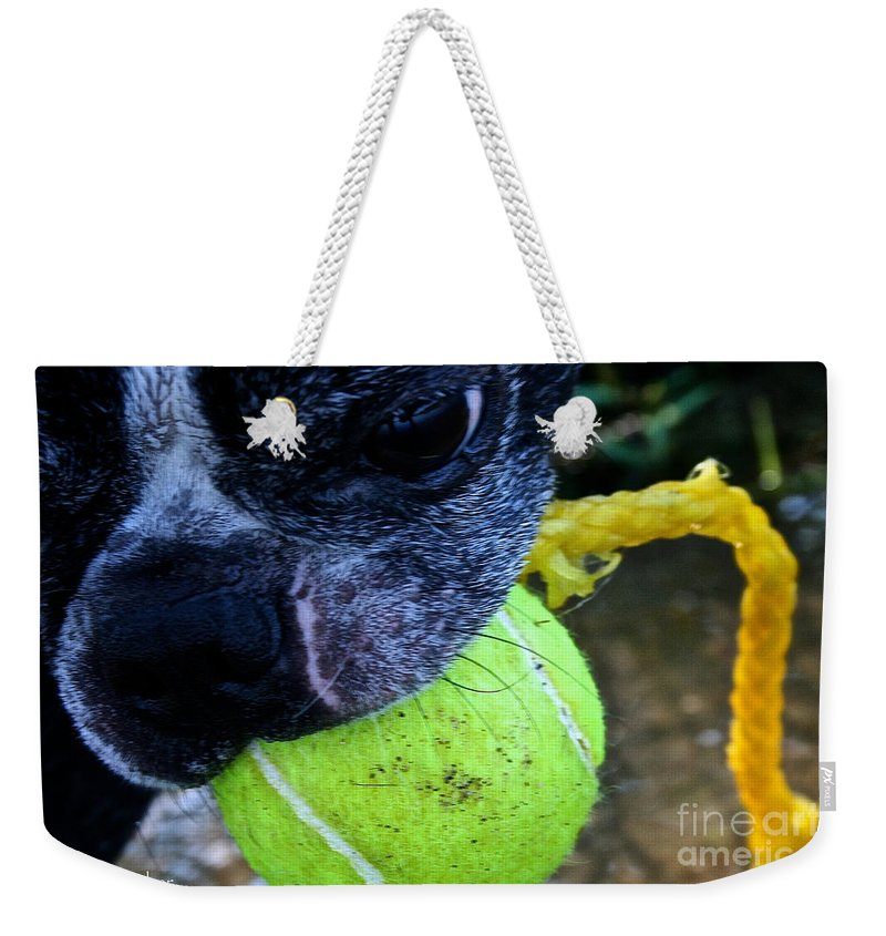Pet Weekender Tote Bag featuring the photograph Stink Eye by Susan Herber