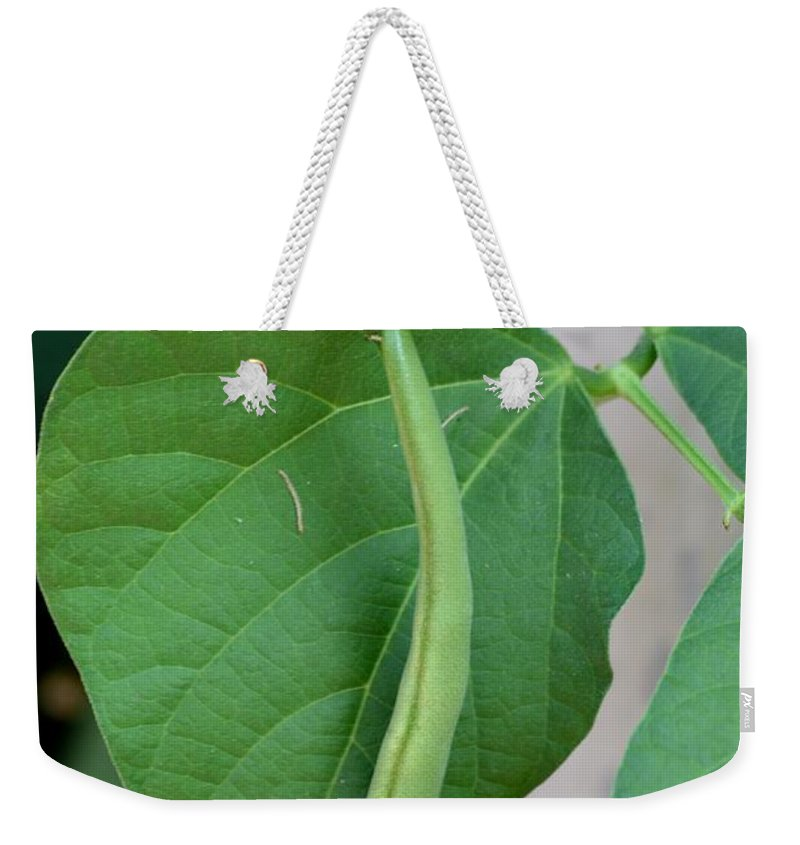 Green Weekender Tote Bag featuring the photograph Stringbeans On The Vine by Maria Urso