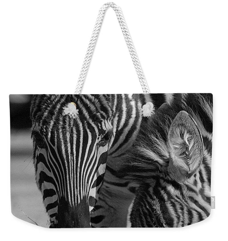 Stripes Weekender Tote Bag featuring the photograph Stripes - Zebra by D'Arcy Evans
