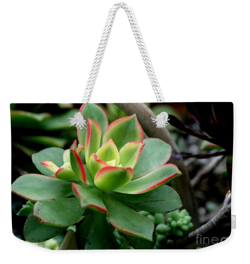 Succulent Weekender Tote Bag featuring the photograph Succulent by Living Color Photography Lorraine Lynch