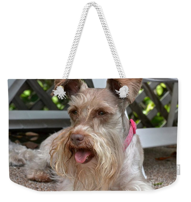 Pet Weekender Tote Bag featuring the photograph Summertime by Carol Bradley