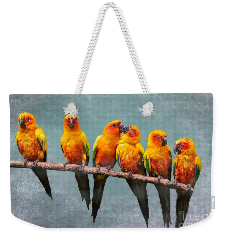 Sun Parakeet Weekender Tote Bag featuring the photograph Sun Conures by Louise Heusinkveld