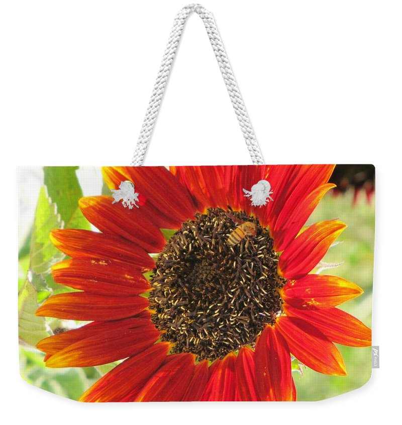 Sunflowers Weekender Tote Bag featuring the photograph Sunflower With Bee by Michelle Cassella