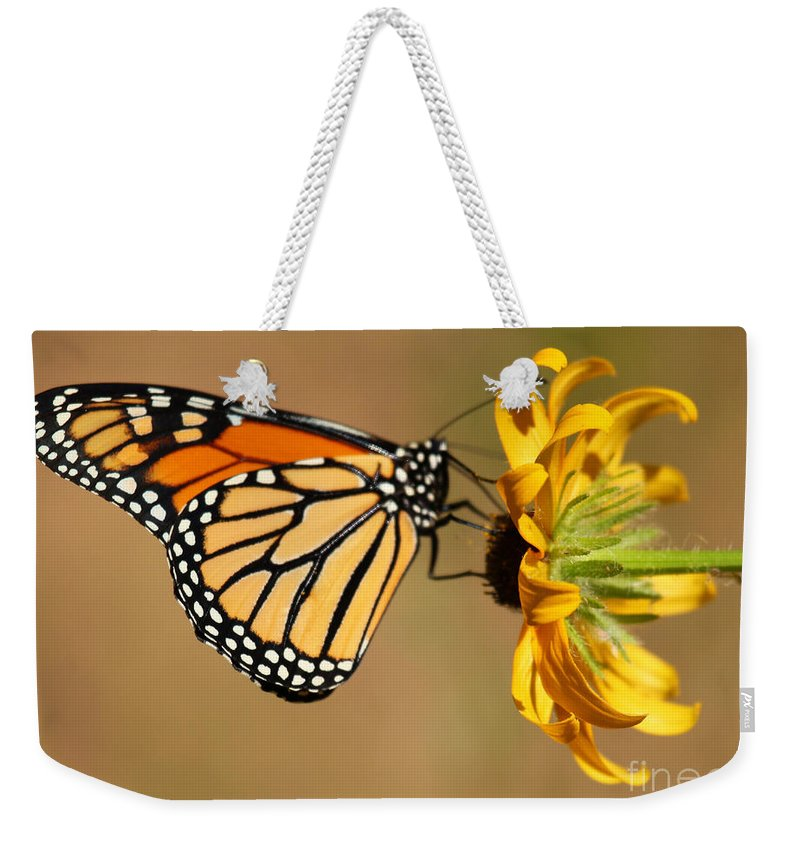 Butterfly Weekender Tote Bag featuring the photograph Sunlight Colors by Adam Jewell