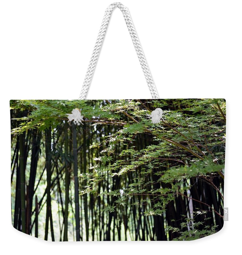 Sunlit Weekender Tote Bag featuring the photograph Sunlit Bamboo by Maria Urso